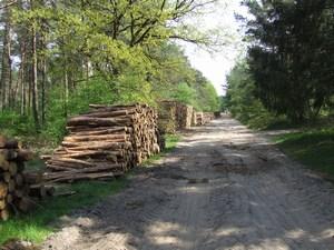 bossen met paden